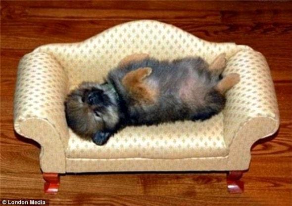 5.16.15 - Cutest Sleeping Puppies17