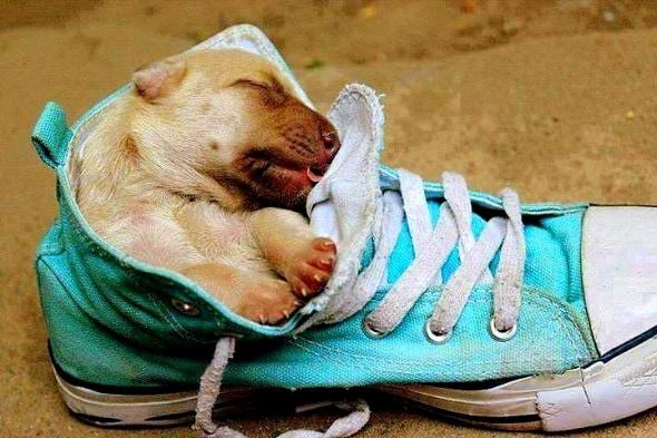5.16.15 - Cutest Sleeping Puppies3