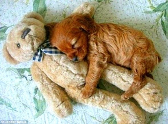 5.16.15 - Cutest Sleeping Puppies5