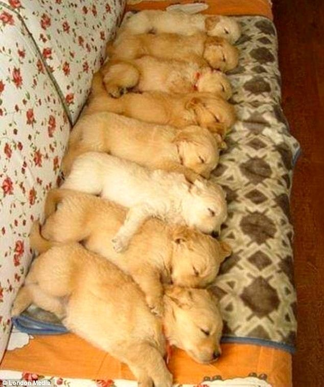 The Cutest Sleeping Puppies Youll Ever See - Puppies sleeping