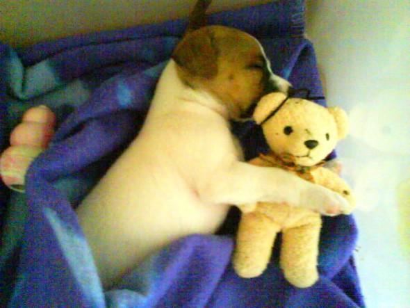 5.16.15 - Cutest Sleeping Puppies7
