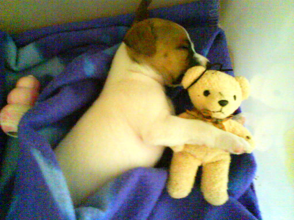 the cutest sleeping puppies you'll ever see