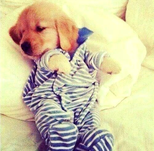 5.16.15 - Cutest Sleeping Puppies8