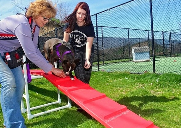 5.17.15 - Teen Builds & Donates Agility Course for Shelter Dogs1