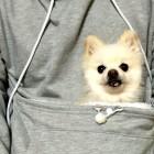 5.20.15 - Dog Hoodie1