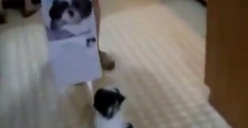 This Dog Really Hates Calenders