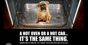 Woman in Florida Cited for Leaving a Dog in a Hot Car