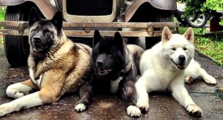 Blinded Rescue Dog's Little Brothers Step Up to Be Her Guides