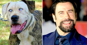 17 Celebrities Who Have Dog Twins