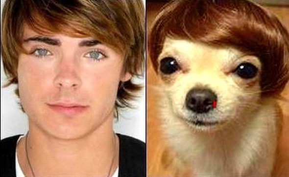 22.15 - Celebrities Who Have Twin Dogs12