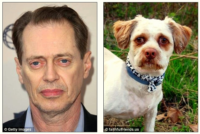 22.15 - Celebrities Who Have Twin Dogs14