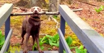 A Dog and His Stick Are Not Easily Parted
