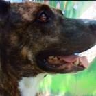 Homeless Man Rescues Dog but Denies Heroism