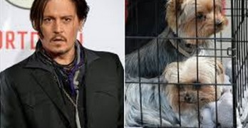 Johnny Depp Could Face 10 Years In Prison for Dog Smuggling