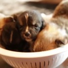 A Bowl Full of Cuteness