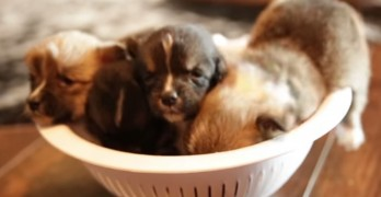 A Bowl Full of Cuteness