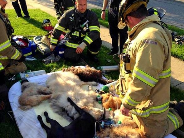5.28.15 - Fire Academy Student Saves the Lives of 16 Dogs in Deadly Blaze1