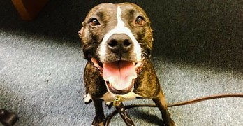 Dog on Death Row Saved by Becoming a Police Officer
