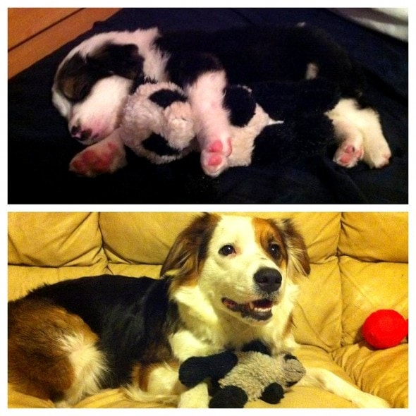 5.29.15 - Pets Who've Loved the Same Toys Since They Were Babies1