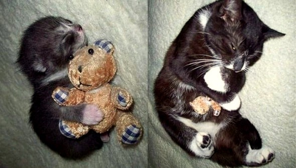 5.29.15 - Pets Who've Loved the Same Toys Since They Were Babies10