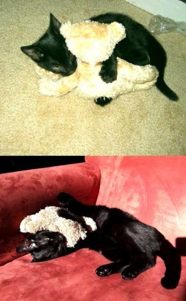 5.29.15 - Pets Who've Loved the Same Toys Since They Were Babies12