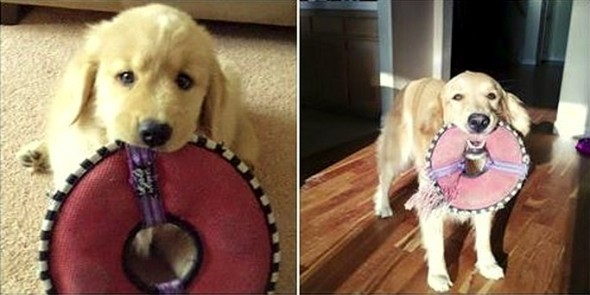 5.29.15 - Pets Who've Loved the Same Toys Since They Were Babies13