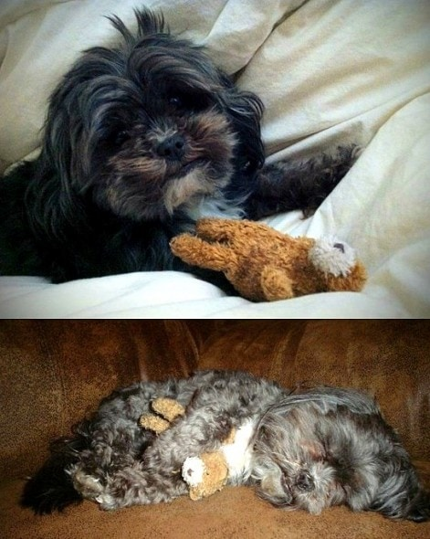 5.29.15 - Pets Who've Loved the Same Toys Since They Were Babies16