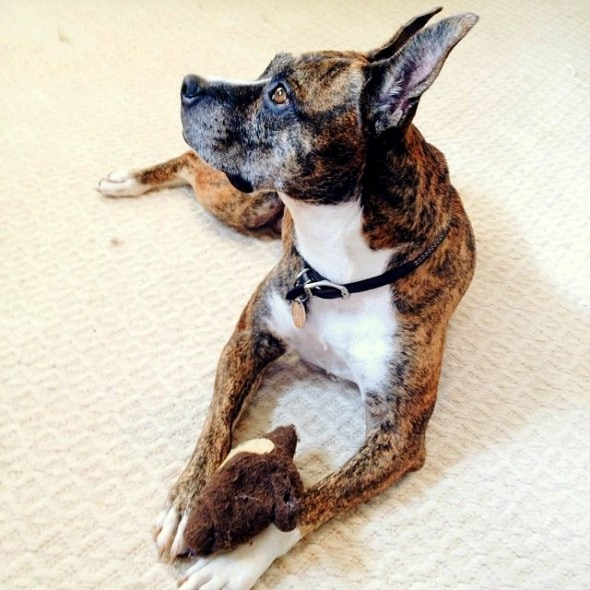 5.29.15 - Pets Who've Loved the Same Toys Since They Were Babies17