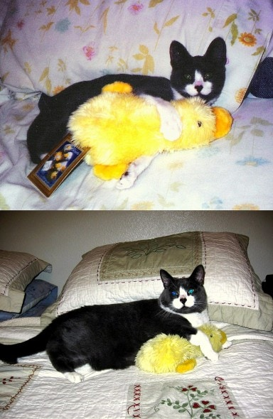 5.29.15 - Pets Who've Loved the Same Toys Since They Were Babies2