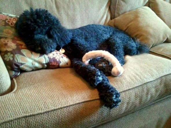 5.29.15 - Pets Who've Loved the Same Toys Since They Were Babies22