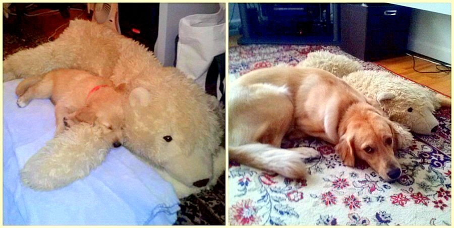 23 Pets Who've Loved the Same Toys Since They Were Babies
