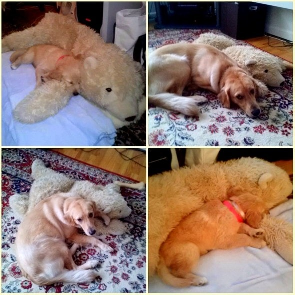 5.29.15 - Pets Who've Loved the Same Toys Since They Were Babies3