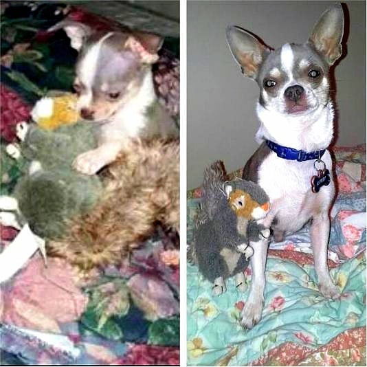 5.29.15 - Pets Who've Loved the Same Toys Since They Were Babies5