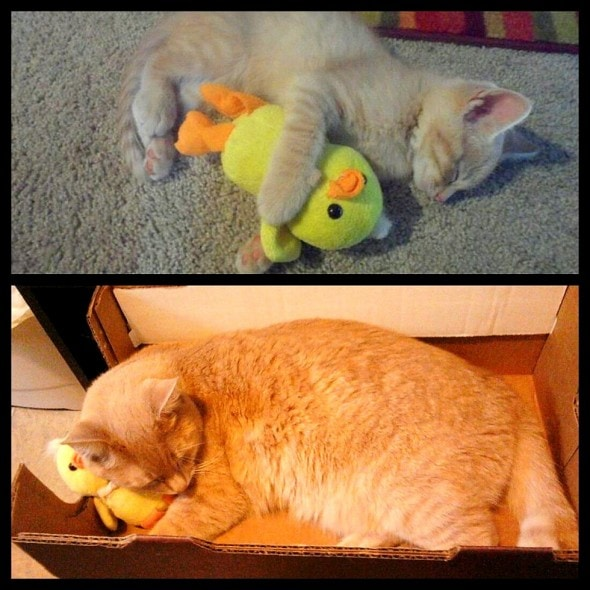 5.29.15 - Pets Who've Loved the Same Toys Since They Were Babies6