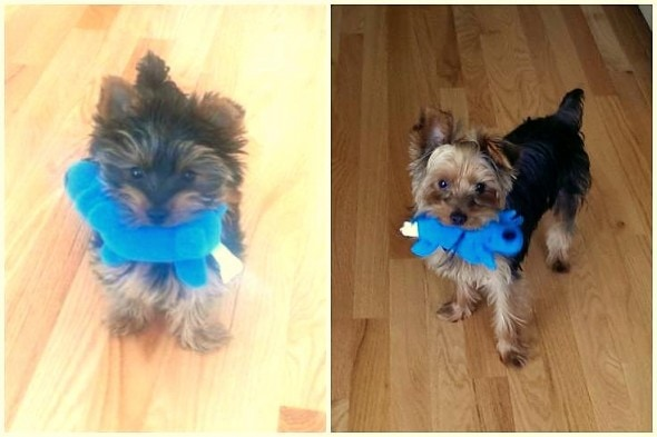 5.29.15 - Pets Who've Loved the Same Toys Since They Were Babies7