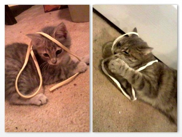 5.29.15 - Pets Who've Loved the Same Toys Since They Were Babies8