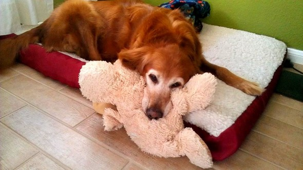 5.29.15 - Pets Who've Loved the Same Toys Since They Were Babies9