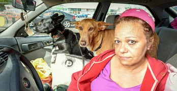 Teacher Chooses to Live in Car Rather Than Give Up Rescue Dogs