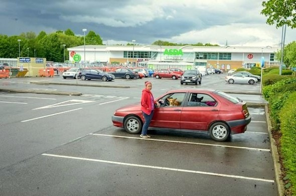 5.30.15 - Teacher Chooses to Live in Car Rather Than Give Up Dogs3