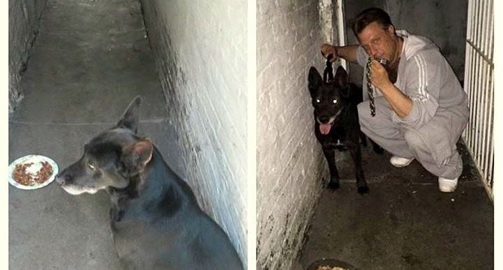 Dog Rescued After 12 Years of Living in an Alley