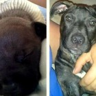 Puppy On Death's Door Miraculously Survives Swimmer Syndrome
