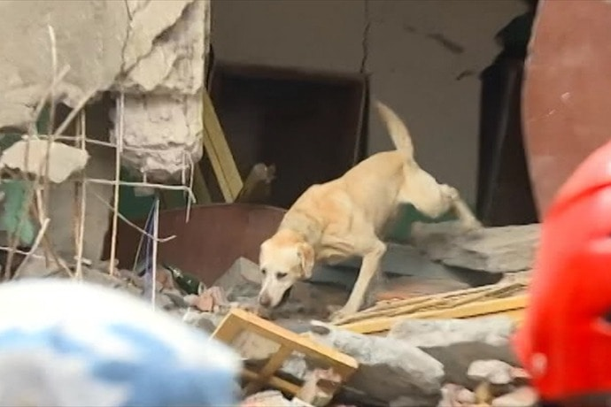Stray from Iowa Sent to Nepal as Search and Rescue Dog
