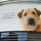 """""""Looking For You"""" Campaign to Put Rescue Dogs in Public Eye"""