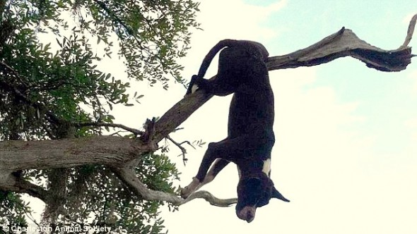 5.7.15 - Dog Impaled on Tree Branch for 24 Hours Miraculously Survives1