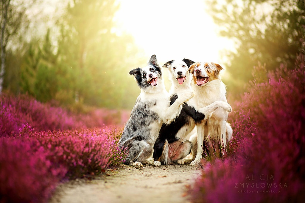 5.7.15   Quotes About Dogs. U201c