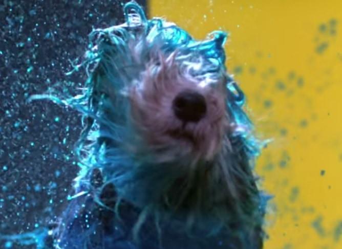 Shelter Dogs Make Modern Art to Raise Adoption Awareness