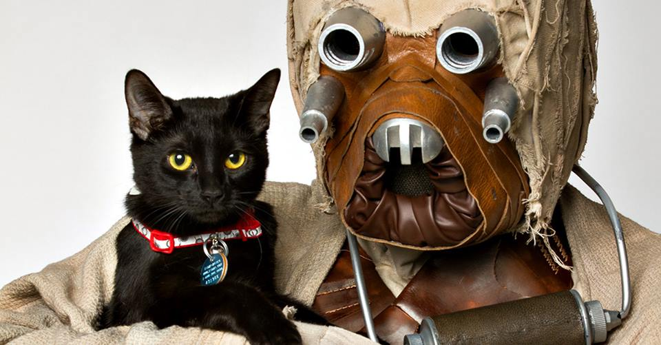 Humane Society Uses Star Wars Pics to Boost Adoptions