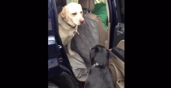 Dog Helps Dog Out of Car