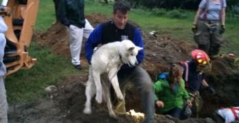Elder Dog Rescued from Underground