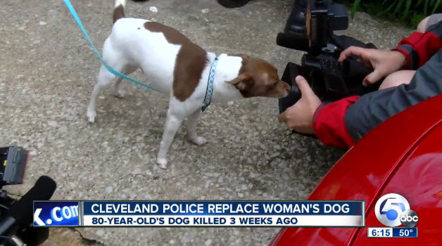Police Officers Surprise Elderly Woman With Rescue Dog